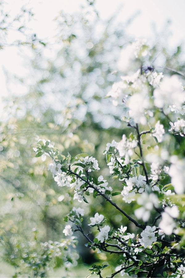 Elina Porokka - Työhyvinvointia, läsnäoloa & voimavaroja